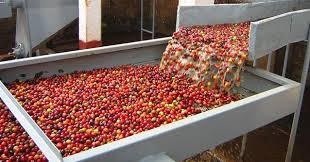 کارخانه بسته بندی میوه خشک در هوراند به بهره برداری رسید