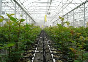 بزرگترین گلخانه صنعتی خاورمیانه در ارس احداث میشود
