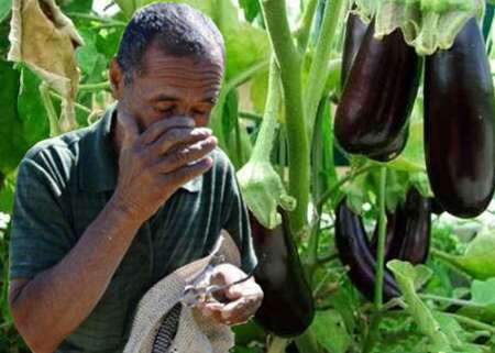 چالشهای زمستانه کشاورزی